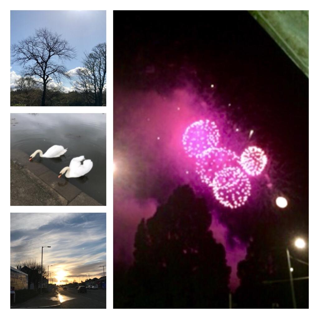Fireworks, swans, Glasgow