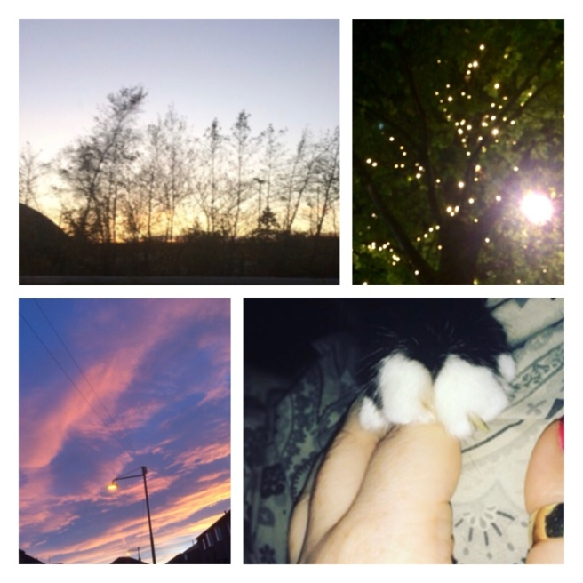 Sunset paws