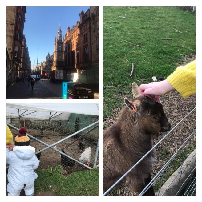 Buchanan st, Pygmy goat, baba & a chicken