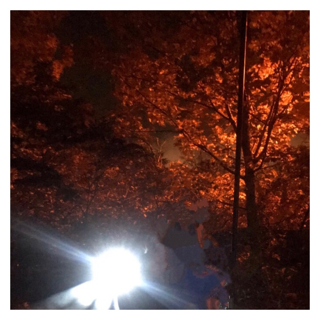 Autumn leaves in street lamp