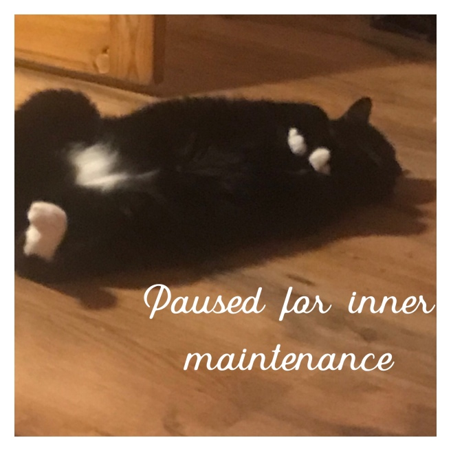 Black and white cat lying in back with text, paused for inner maintenance