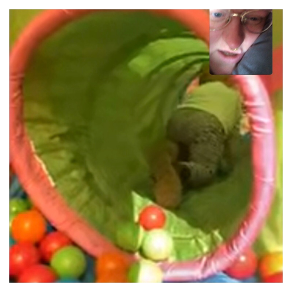 FaceTime of toddler in ball tunnel