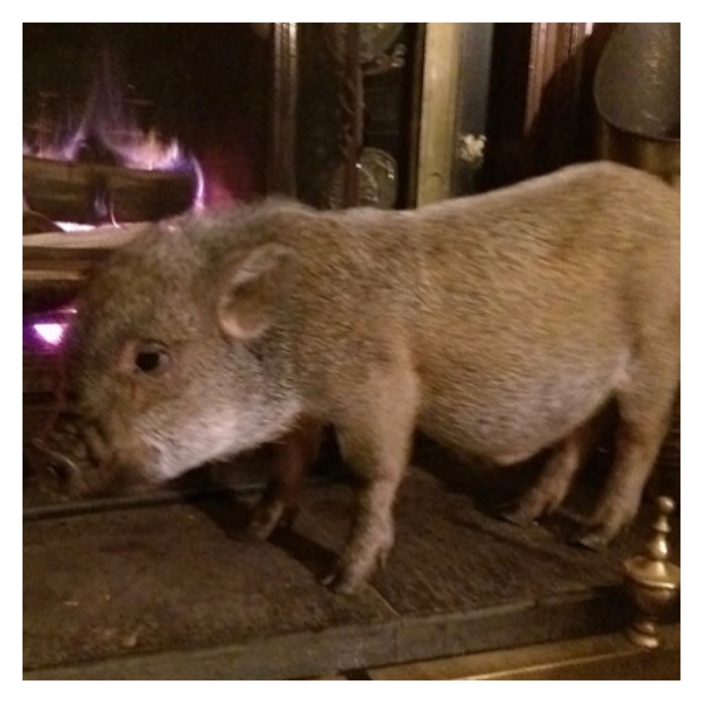 Piglet in front of fireplace