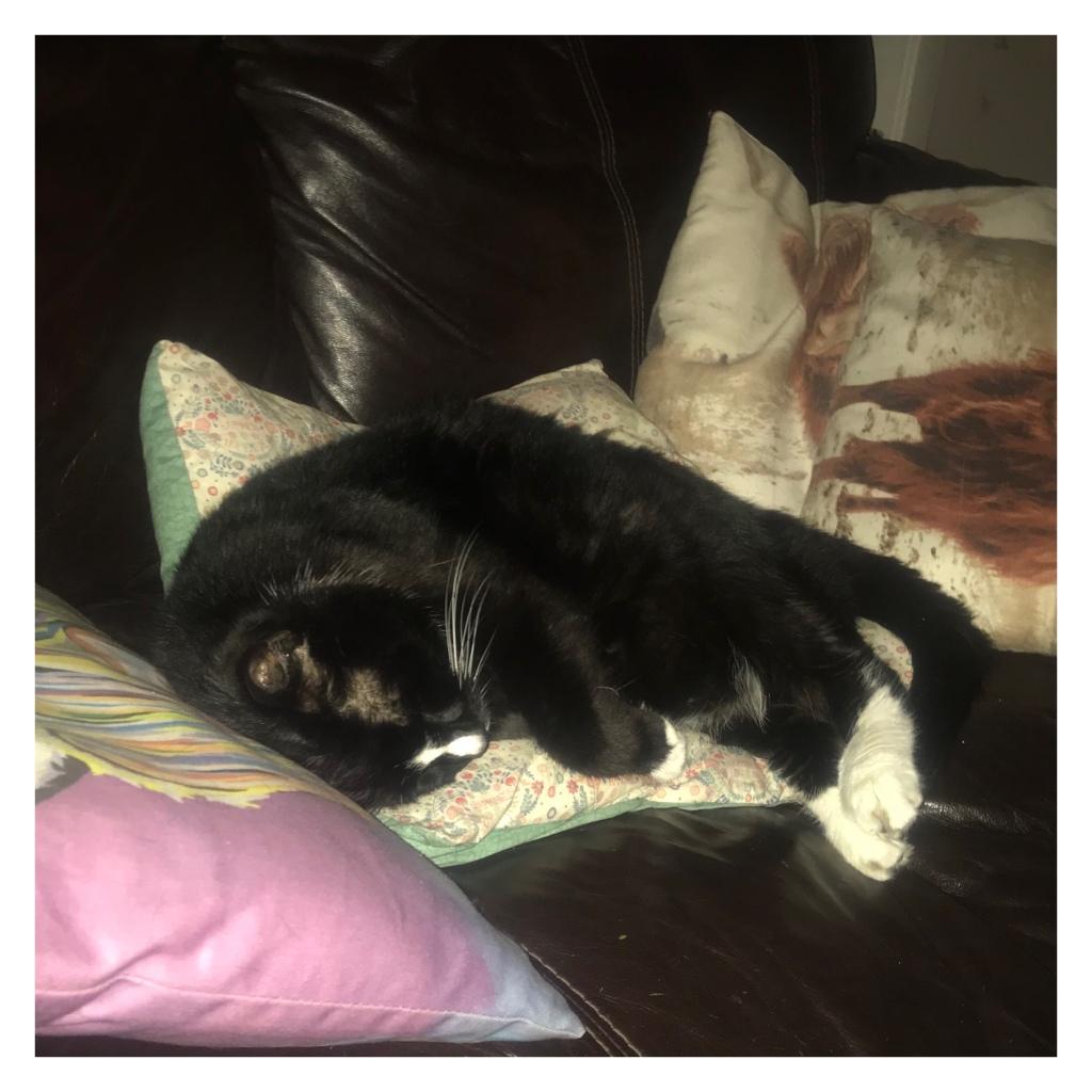 Black and white sleeping on cushions