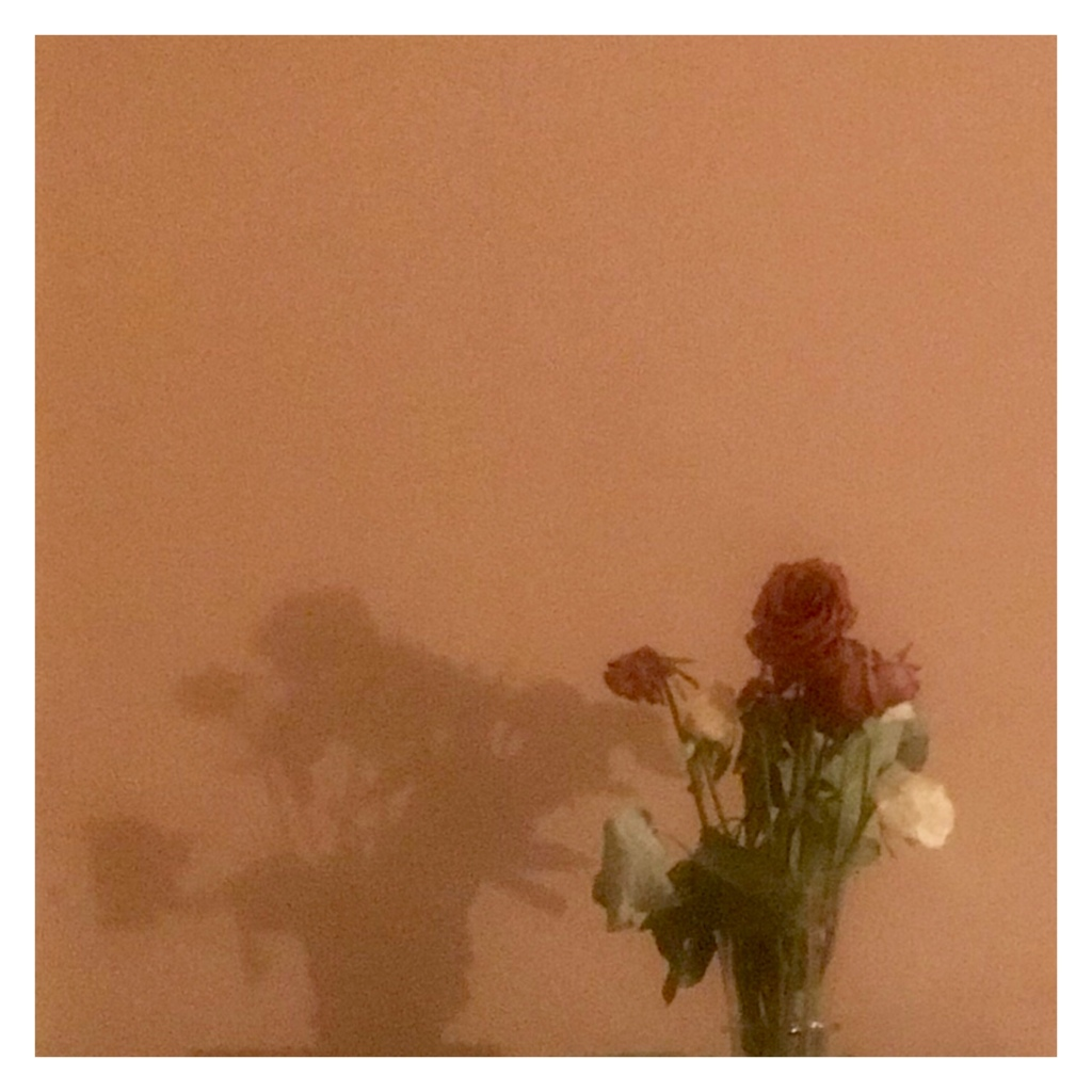 Dead roses in a vase and their shadow