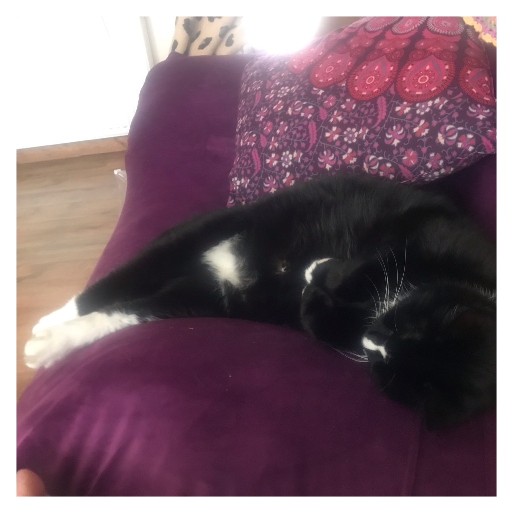 Black & white cat sleeping on purple sofa