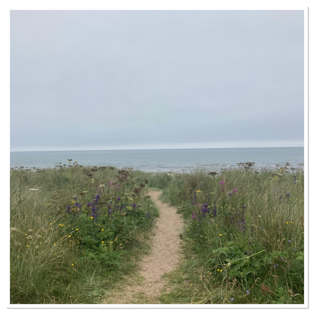View from hill over a beach.grass & wildflowers with sand past leading down to the blue sea